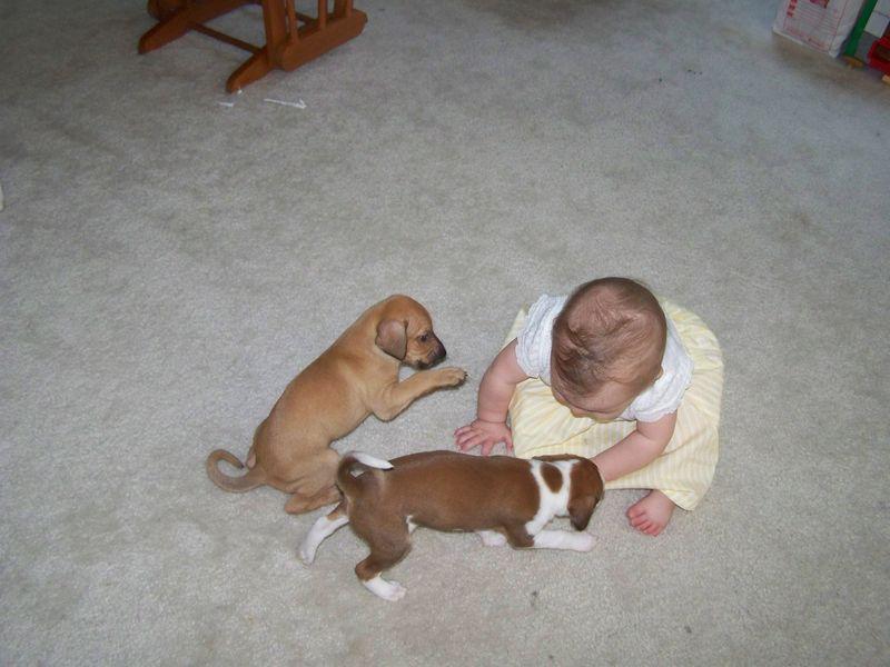 Sadie's Puppies, born May 16 042