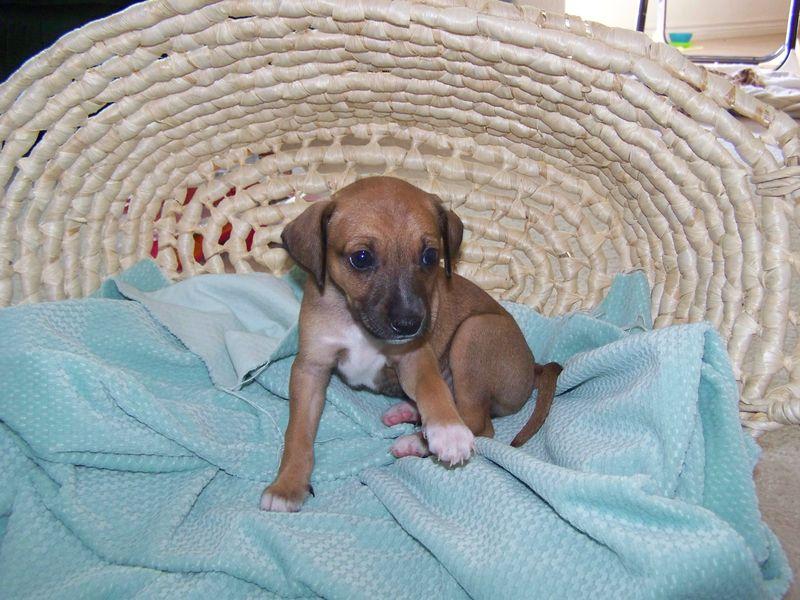 Sadie's Puppies, born May 16 051