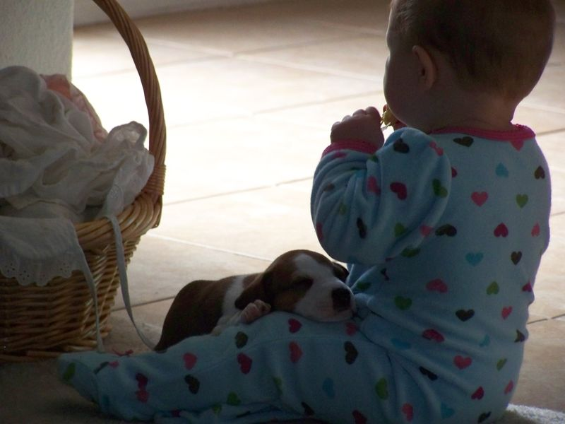 Sadie's Puppies, born May 16 020