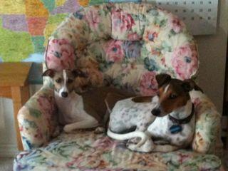 Sadie & Mr. Huckleberry