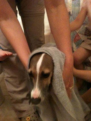 Sadie after a bath